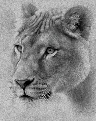 Mixed Media Royalty Free Images - Black and White Lioness Royalty-Free Image by Diane Rada