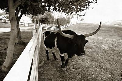 Photograph - Black And White Longhorn by Floyd Snyder