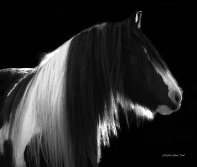Black And White Mare Print by Terry Kirkland Cook