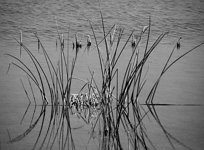 Black And White Marsh Design Art Print by Rosalie Scanlon