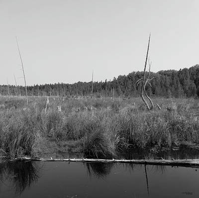 Photograph - Black And White Marsh by Sally Sperry