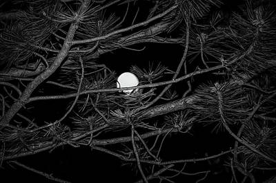 Photograph - Black And White Moon Through Pines by Aimee L Maher Photography and Art Visit ALMGallerydotcom