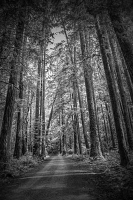 Black And White Of A Road In A Vancouver Island Rain Forest Art Print