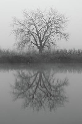 Photograph - Black And White Of Foggy Tree by Tony Hake