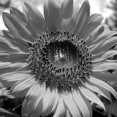 Artist Christine Belt Photograph - Black And White Oh Summer Day by Christine Belt