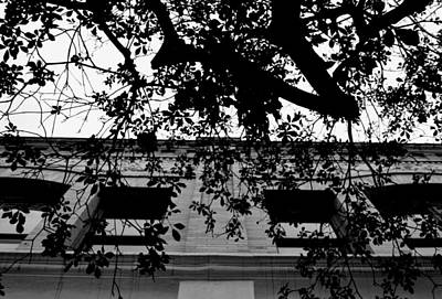 Photograph - Black And White Old Town Pasadena Building Tree View by Matt Harang