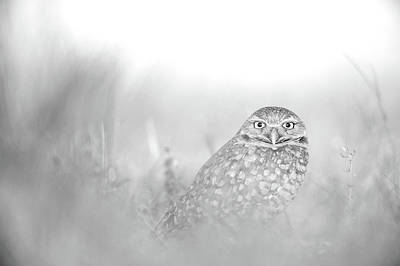 Black And White Owl Photography Wall Art Prints Art Print by Wall Art Prints