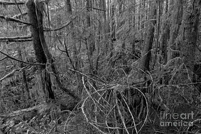 Photograph - Black And White Pacific Rim Rainforest by Adam Jewell