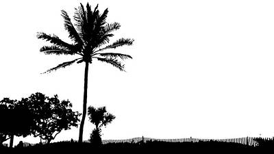 Photograph - Black And White Palm  by Lawrence S Richardson Jr