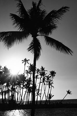 Photograph - Black And White Palm Tree by Pamela Walton