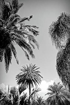 Photograph - Black And White Palms In The Sky by Aimee L Maher Photography and Art Visit ALMGallerydotcom