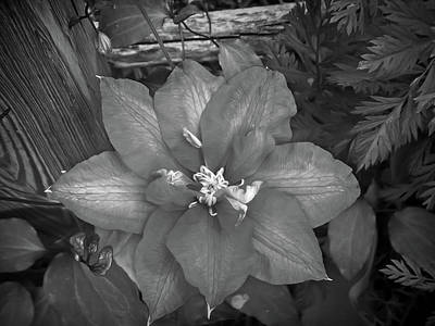 Photograph - Black And White Passion Vine by Aimee L Maher Photography and Art Visit ALMGallerydotcom