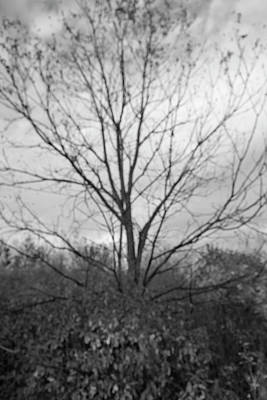 Photograph - Black And White Photo Of Creepy Tree by Sandy Swanson