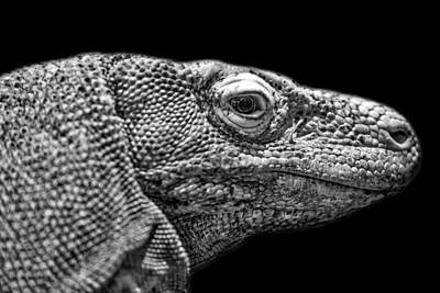 Photograph - Black And White Photograph Of A Komodo Dragon by Preston McCracken