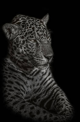 Photograph - Black And White Photograph Of A Leopard  by Preston McCracken