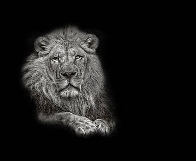 Photograph - Black And White Photograph Of A Lion Looking Forward by Preston McCracken