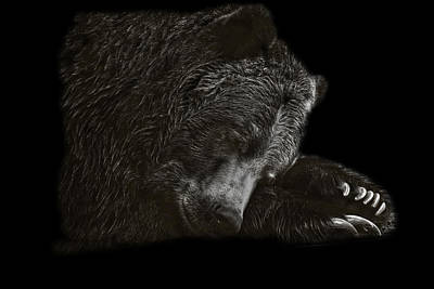 Photograph - Black And White Photograph Of A Sleeping Grizzly Bear by Preston McCracken