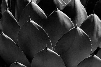 Photograph - Black And White Photographic Detail Of California Cabbage Cactus Agave by Randall Nyhof