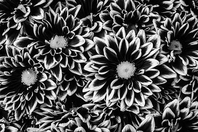 Photograph - Black And White Poms by Garry Gay