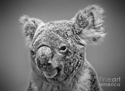 Fuzzy Digital Art - Black And White Portrait Of A Koala  by Jim Fitzpatrick