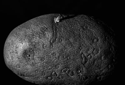 Photograph - Black And White Potato by Dan Sproul