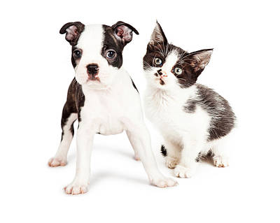 Dog Collage Photograph - Black And White Puppy And Kitten Together by Susan Schmitz