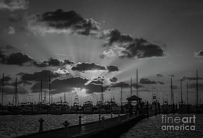 Photograph - Black And White Rays by Tom Claud