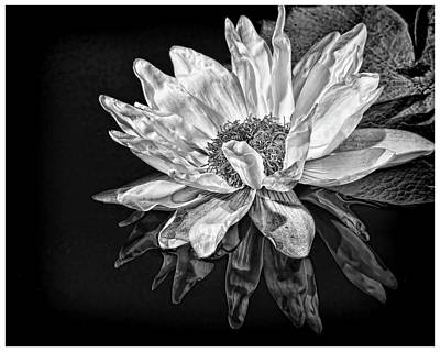 Photograph - Black And White Reflection by Judy Vincent