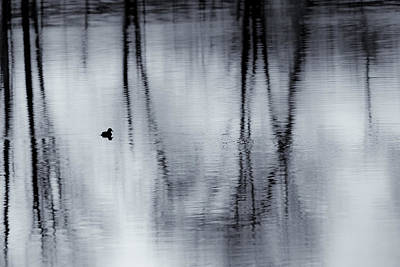 Photograph - Black And White Reflections by Bill Wakeley