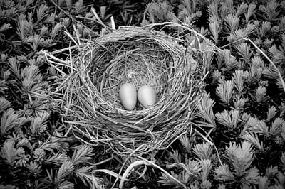 Photograph - Black And White Robins Nest by Aimee L Maher ALM GALLERY