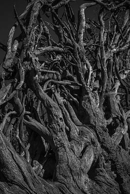 Tree Roots Photograph - Black And White Roots by Garry Gay