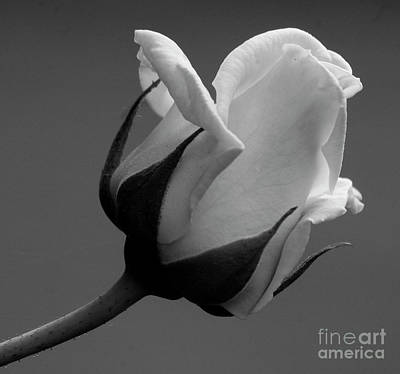Photograph - Black And White Rose 2 by Jim And Emily Bush