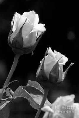 Photograph - Black And White Rose 4 by Jim And Emily Bush