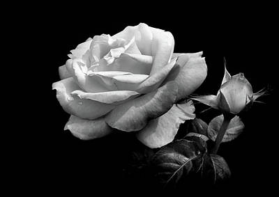Photograph - Black And White Rose 5 by Lilia D