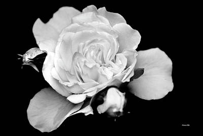 Photograph - Black And White Rose by Christina Rollo