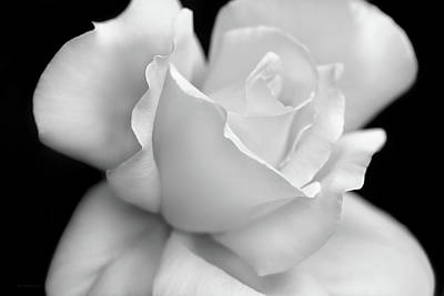 Photograph - Black And White Rose Flower by Jennie Marie Schell