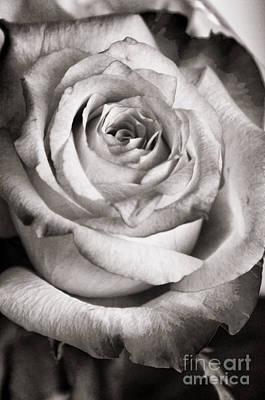 Photograph - Black And White Rose by Jim And Emily Bush