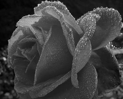 Flowers Photograph - Black And White Rose by Lori Seaman