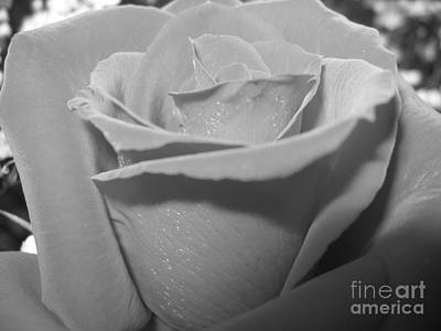Photograph - Black And White Rose Macro by Rose Santuci-Sofranko