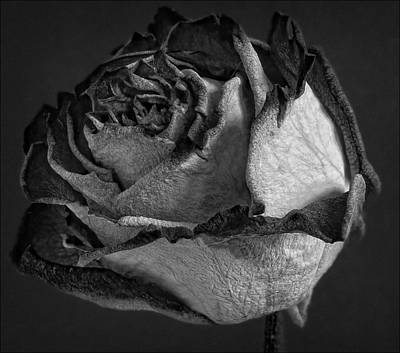 Balck And White Photograph - Black And White Rose by Robert Ullmann