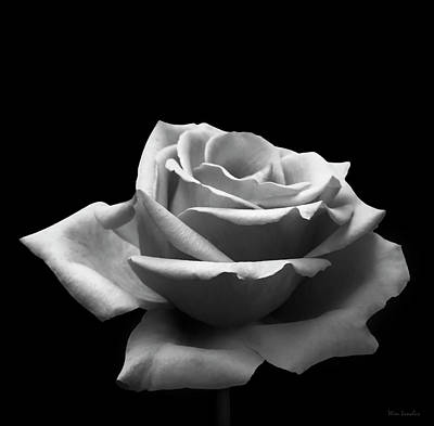 Photograph - Black And White Rose by Wim Lanclus