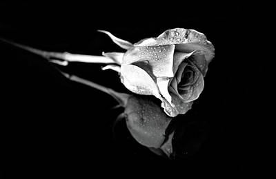 Photograph - Black And White Rose With Reflection by Lilia D