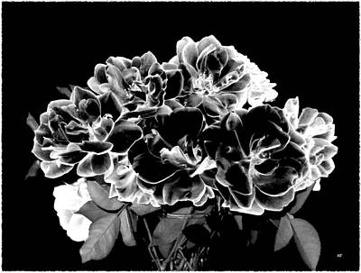 Digital Art - Black And White Roses by Will Borden