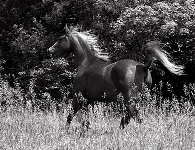 Horses Photograph - Black And White Running Horse by Michael Barry