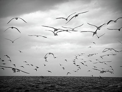 Photograph - Black And White Seagull Flight by Aimee L Maher ALM GALLERY