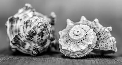 Photograph - Black And White Shell Couple by Heidi Hermes