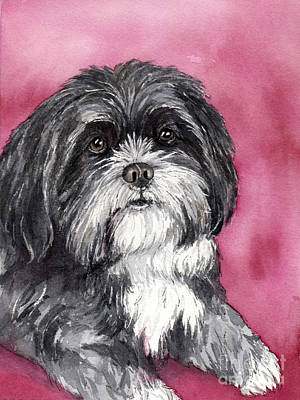 Watercolor Pet Portraits Painting - Black And White Shih Tzu by Cherilynn Wood