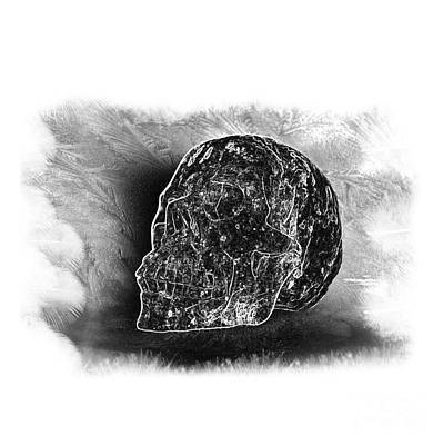 Photograph - Black And White Skull On Transparent Background by Terri Waters