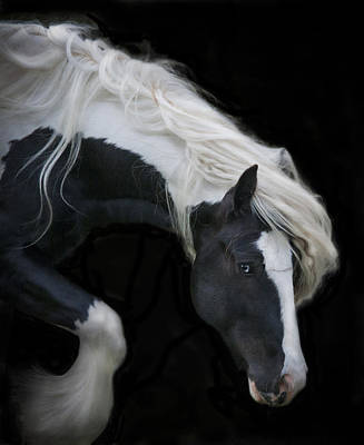 Gypsy Vanner Horse Photograph - Black And White Study V by Terry Kirkland Cook