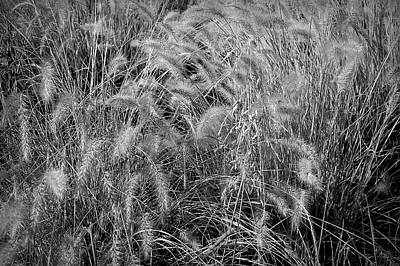 Photograph - Black And White Summer Wheat by Aimee L Maher ALM GALLERY